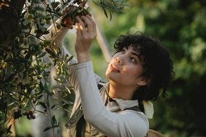 A girl picking fruits at a farm